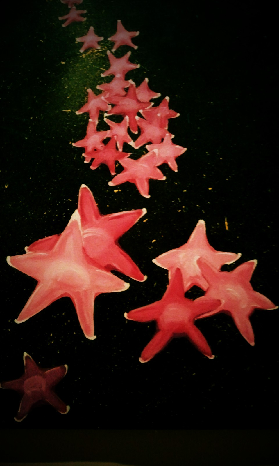Thanksgiving stars
