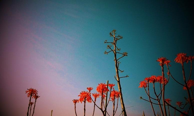 Spring in Vilanova i la Geltrú